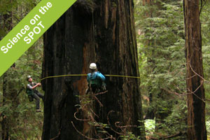 Science on the SPOT: Measuring Redwood Giants
