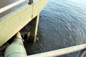 Sewage Spills Increasing