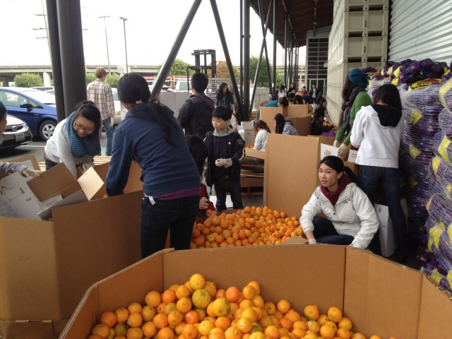 Fresh oranges at the Food Bank. (Kelly Wilkinson / KQED)