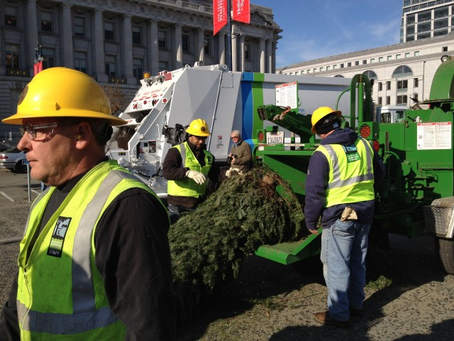 How to Compost or Recycle Your Christmas Tree in the Bay Area