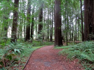 Hendy Woods in Mendocino is one of 55 state parks still set to close. (Molly Samuel/KQED)
