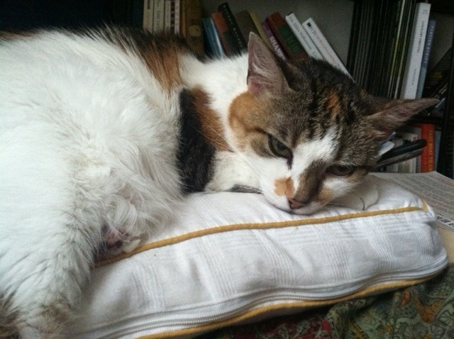 Lily, Nina Thorsen's 14-year-old calico, prefers her own bed, so she'll have a petsitter visit. (Photo: Nina Thorsen)