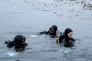 Researchers catalog marine life in the kelp forest off Monterey in 2008. (Photo: KQED QUEST)
