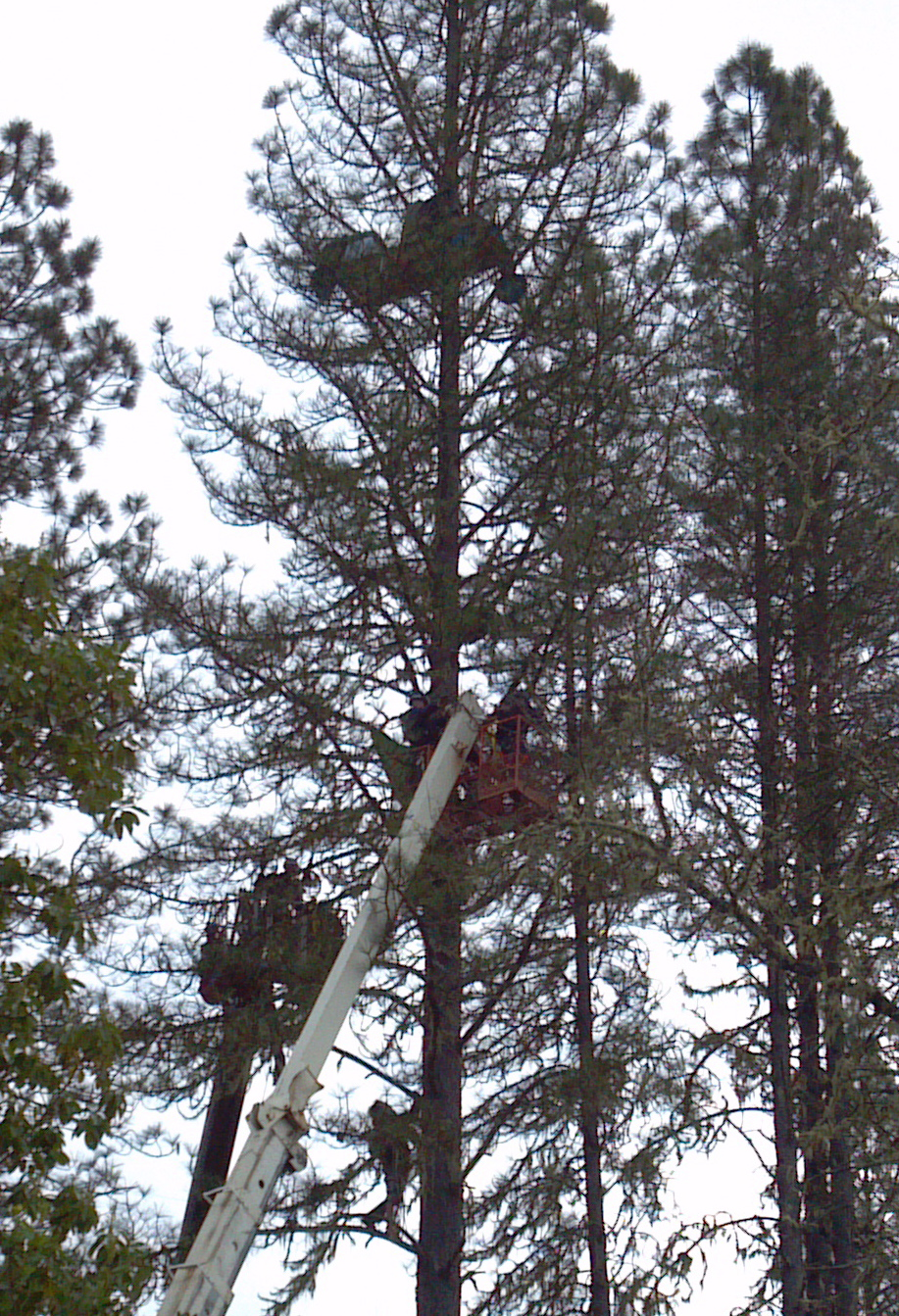 Police reportedly used a cherry picker to arrest tree sitters. (Kelly Larson)