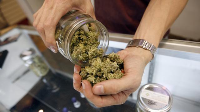 Oakland Shuts Down Three Marijuana 'Speakeasies'