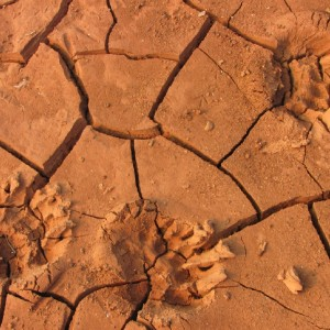 Bear tracks on the dry bottom of Shasta Lake in Northern California. (Molly Samuel/KQED)