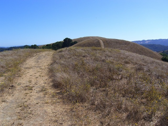 Briones Regional Park near Lafayette, typical of Bay Area landscapes experiencing high fire danger in the current drought. (Dan Brekke/KQED)