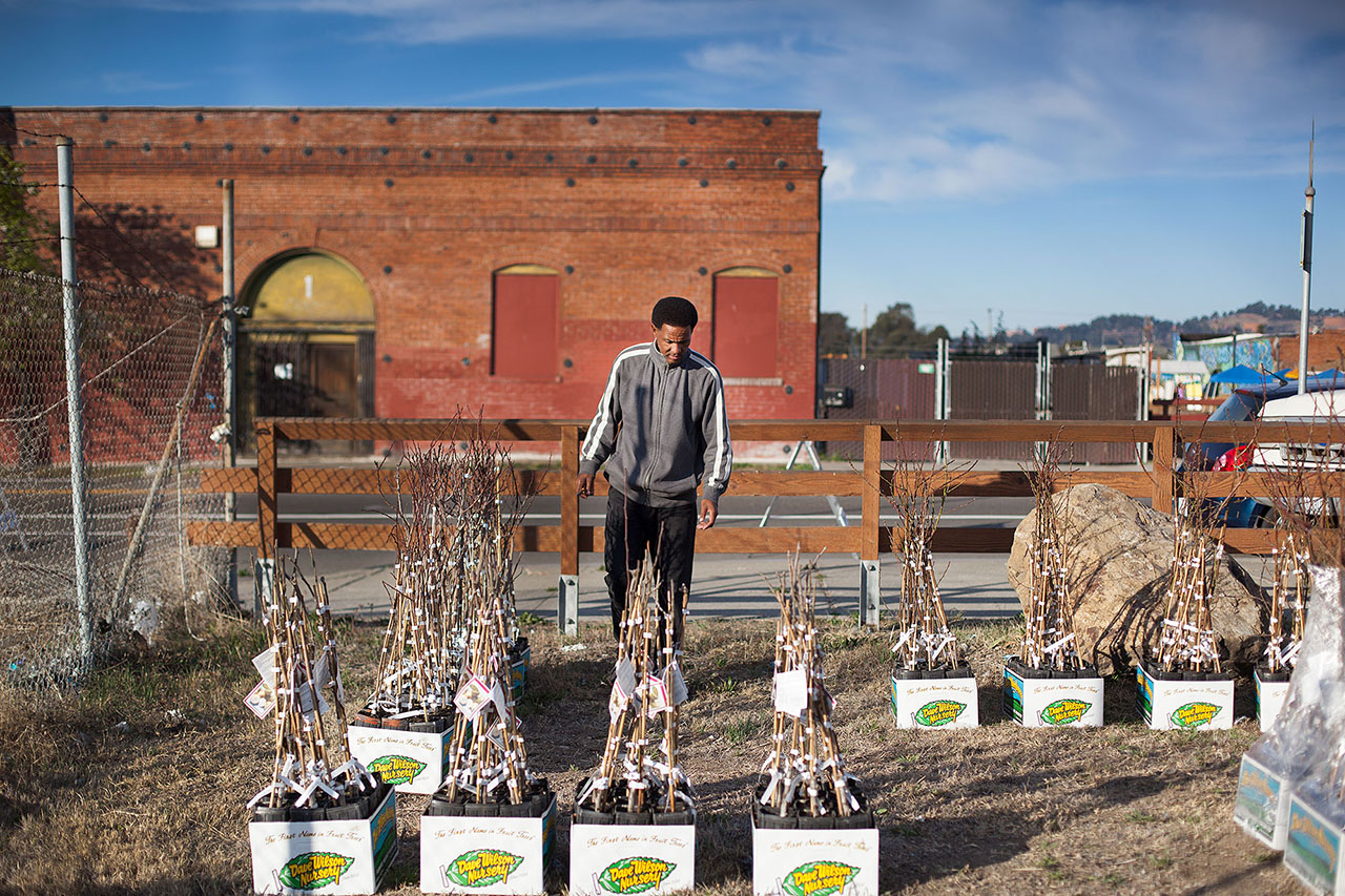 Barry Dugar, from Richmond, helped distribute fruit tree saplings at the Richmond Greenway as part of Richmond's Martin Luther King Jr Day celebration. The non-profit Self-Sustaining Communities, which operates an urban farm in Richmond, handed out 500 fruit trees, including plum, peach, apricot, and cherry varieties.