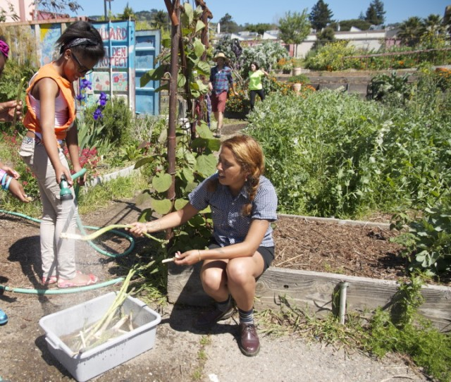 Washing off freshly picked asparagus at the Willard Middle School garden. Parents at the school are protesting suggested cuts to the cooking and gardening program. (Kaia Diringer/Berkeleyside)