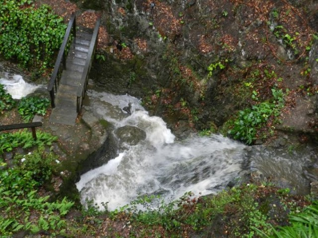 A gushing Vicente Creek. (Andy Fremder/Berkeleyside)