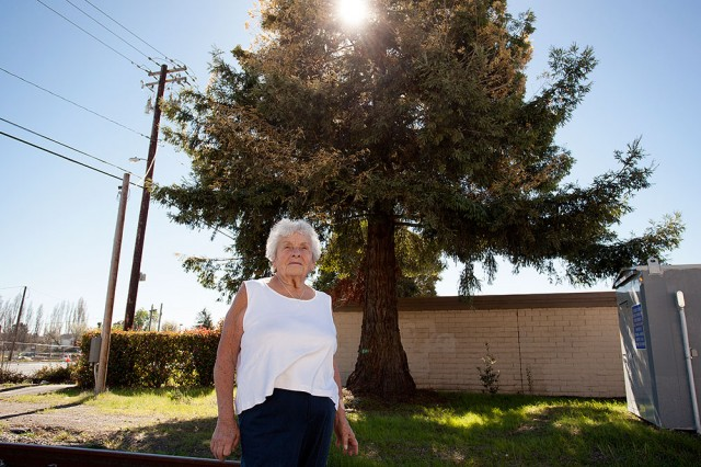 Louise Santero stands under a rare albino chimera redwood tree near her home in Cotati. The tree is threatened with removal. (Mark Andrew Boyer/KQED)