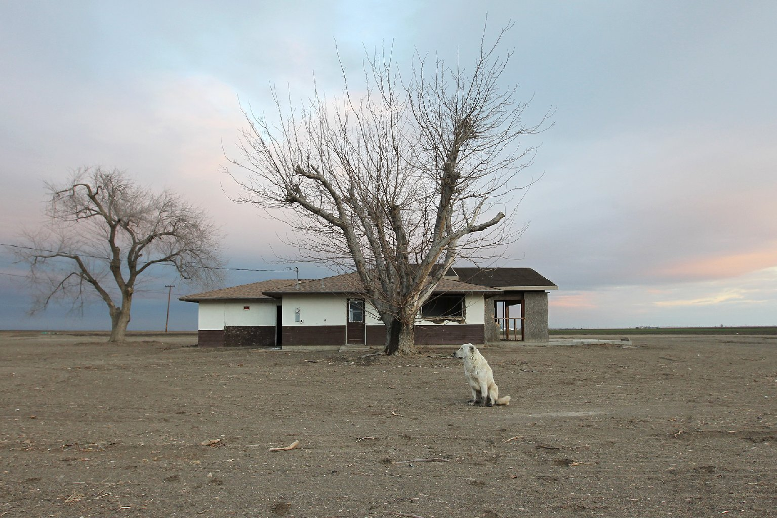 A dog hangs around an abandoned farmhouse on February 6, 2014 near Bakersfield, California. (David McNew/KQED)