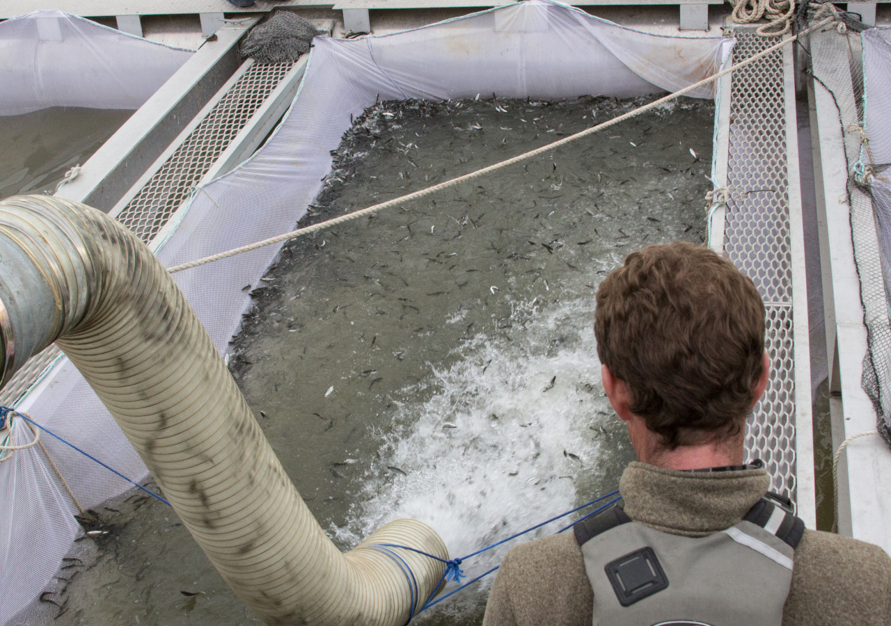 News pix leland yee bioblitz salmon and a magical for Coleman fish hatchery