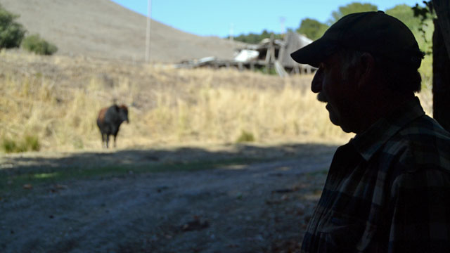 Bob Meehan, ranch manager of Driscoll Ranch, looks over the property before turning it over to the Midpeninsula Regional Open Space District in October 2013. (Matt Hansen/Peninsula Press)