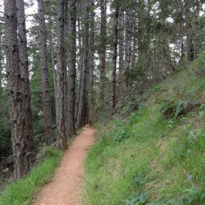 The author's birthday hike followed the Matt Davis Trail. (Grace Rubenstein/KQED)