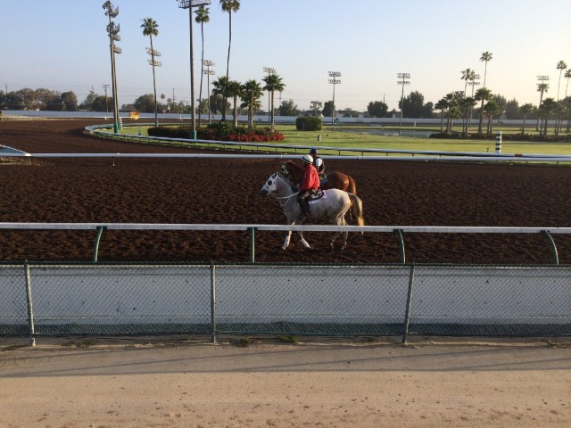 California Chrome trains at Los Alamitos Race Course in Orange County, where quarter horses are usually found.  (Julia McEvoy/KQED)