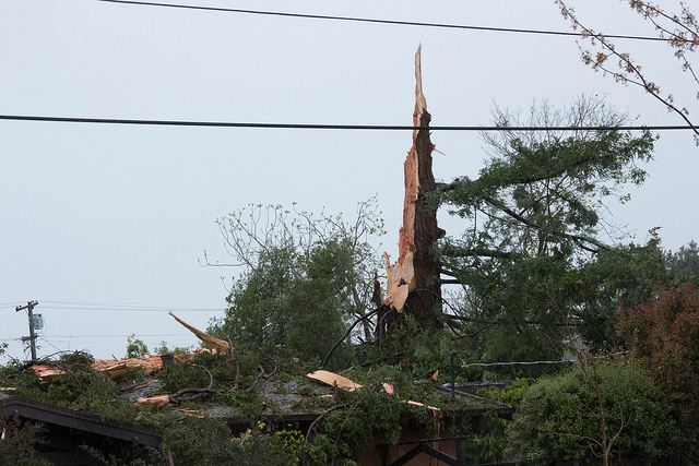 What remains of a Berkeley redwood after being struck by lightning Monday. (Photo: Dan Brekke/KQED)