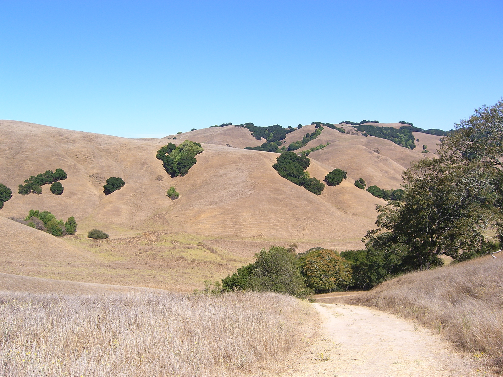 Briones Regional Park in the East Bay. (Dan Brekke/KQED)