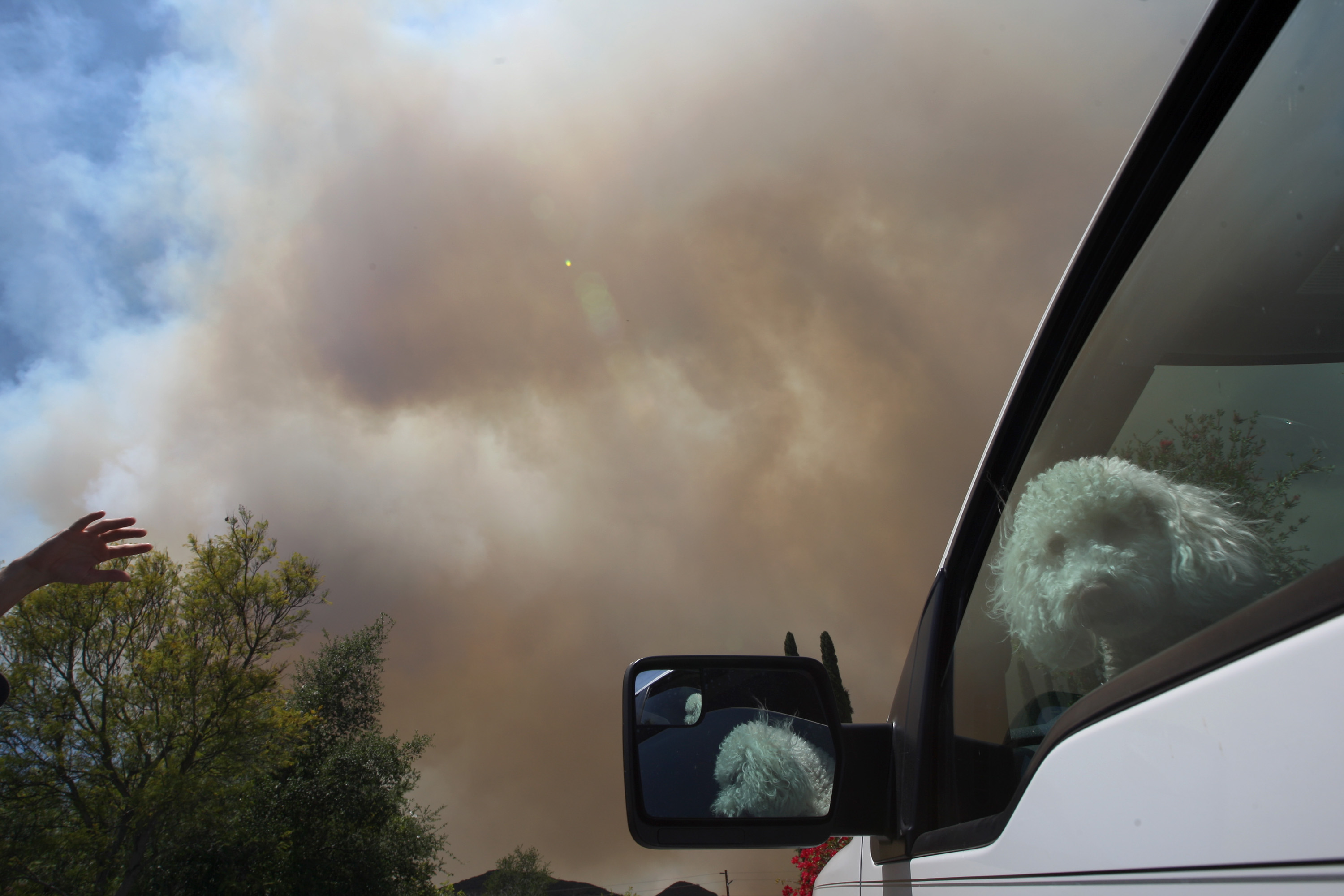 A dog looks out from an air conditioned truck as the southeast flank of a fire near San Marcos, San Diego County. (David McNew/Getty Images)