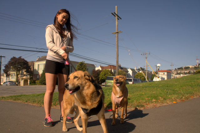 Sunset District resident Shinju Nozawa-Auclair, walking her dogs Diana and Audrey.(Tom Prete/Ocean Beach Bulletin)