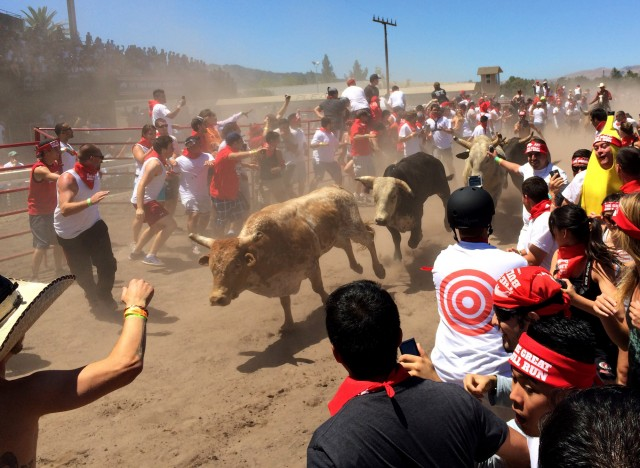 The bulls ran about a quarter-mile down the racetrack at the Alameda County Fairgrounds. (Aaron Mendelson/KQED)