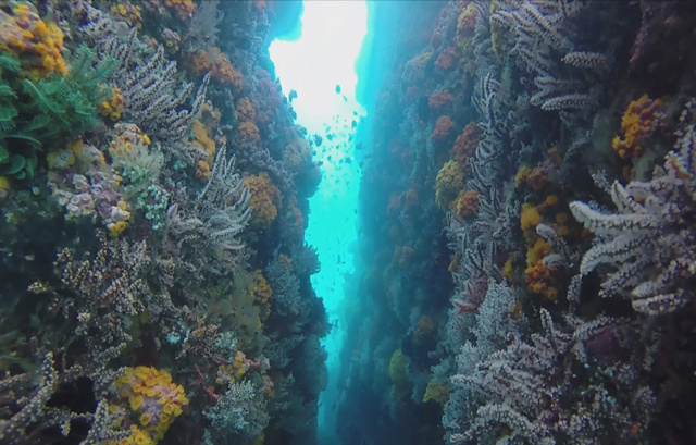 Underwater mountainsides in the Verde Island Passage highlight the dive sites' diverse landscapes. (Photo courtesy of Cal Academy of Sciences)