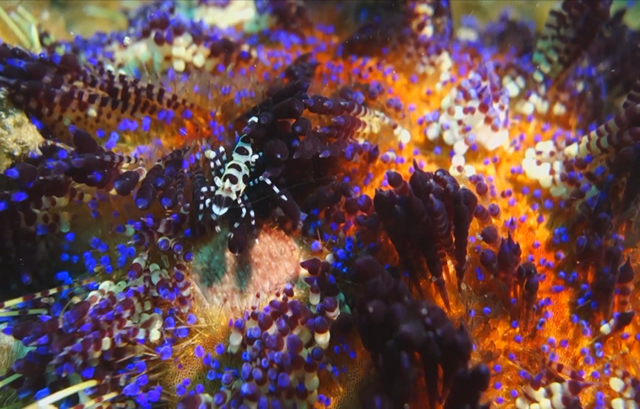 With just enough light for plant life to grow, vibrantly colored coral serve as a home to many of the site's species. (Photo courtesy of Cal Academy of Sciences)