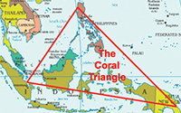 The Coral Triangle in the Indian Ocean. Divers explored the area between Luzon and Mindoro islands.