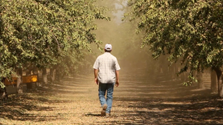 Mike P walks in his almond orchard during harvest season. (Jeremy Raff/KQED)