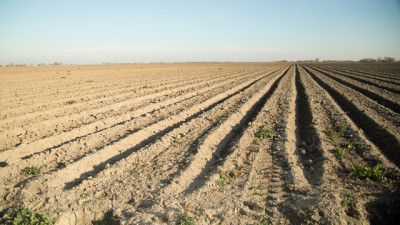 Dry farm fields outside Los Banos, California. (Josh Cassidy/KQED)
