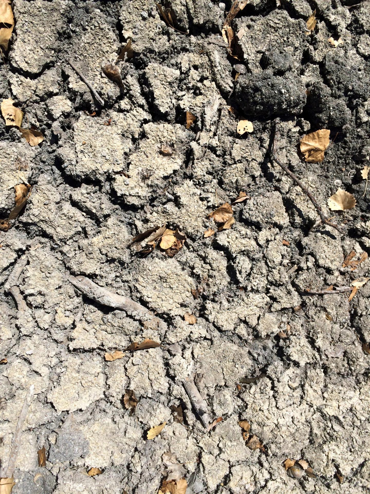 Shadow Cliffs, a Popular Pleasanton Park, Hit Hard by Drought
