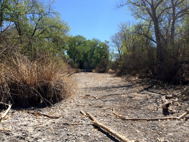 A dry stretch of the Arroyo del Valle in Shadow Cliffs. (Aaron Mendelson/KQED)