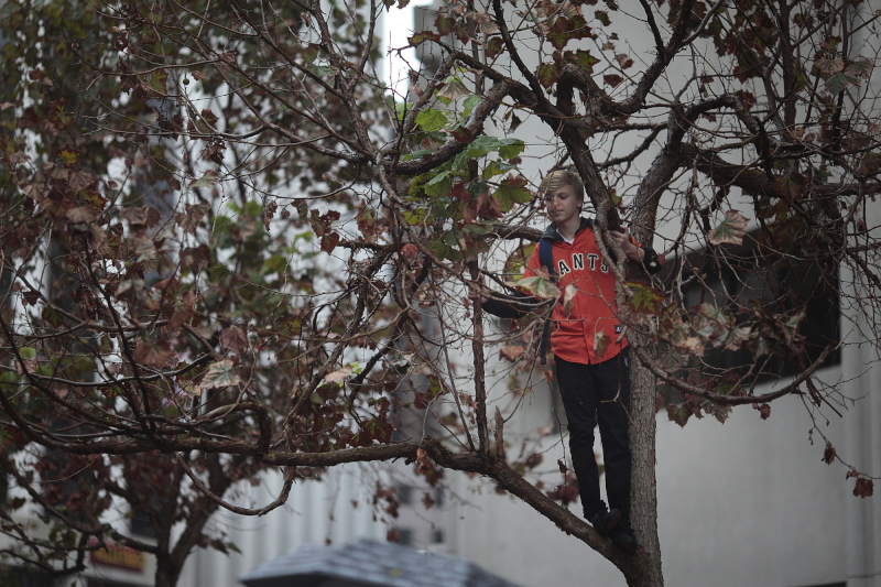 A fan attempts to get a better view of the Giants Parade on Market St.  (James Tensuan/KQED)
