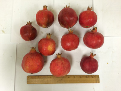 These pomegranates are about an inch smaller than the typical size, but they're packed with antioxidents. (Courtesy of Tiziana Centofanti)