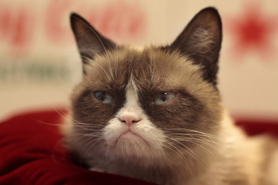 Grumpy Cat poses for the press at Macy's in San Francisco, Calif. on Friday, Nov. 11, 2014. Internet sensation (James Tensuan/KQED)
