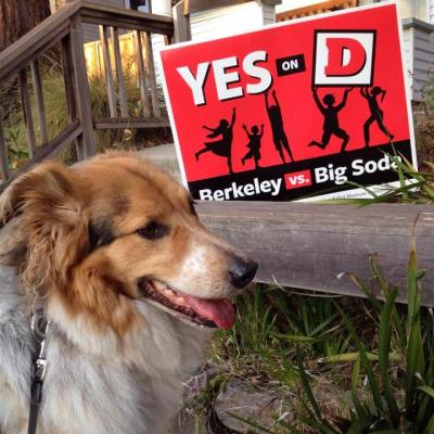 One of the many Yes on D lawn signs that were seen all over Berkeley in the run-up to the Nov. 4 election. (Courtesy: Berkeley vs Big Soda)