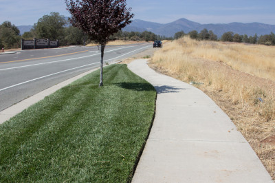 Green and gold: A well-watered lawn and dry grass in a subdivision in Redding, California. (Dan Brekke/KQED)