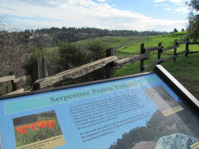 Serpentine Prairie off in the East Bay's Redwood Regional Park.