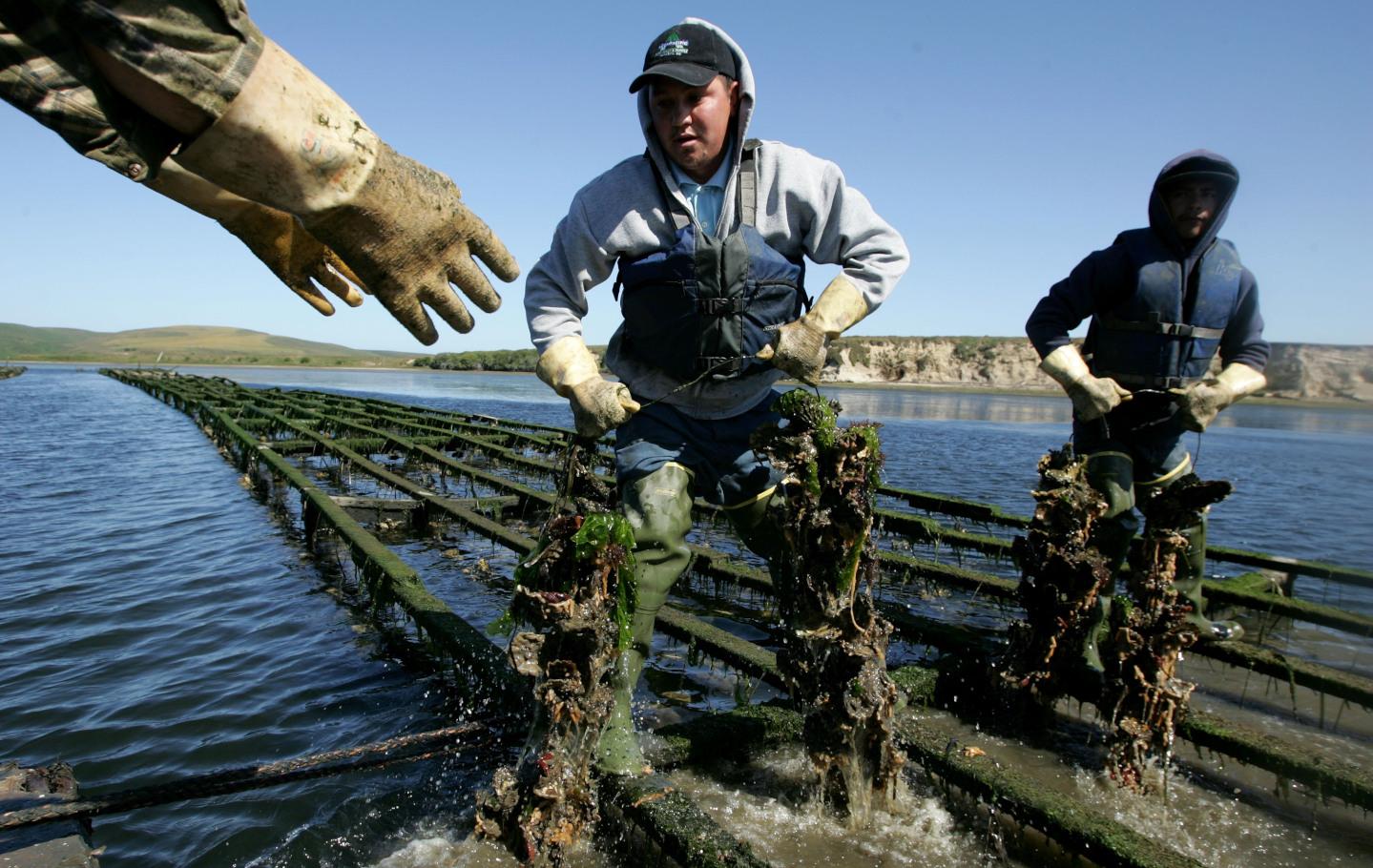Oyster Fisherman Battles National Park Service Over Harvest Rights