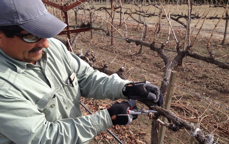 wine drought