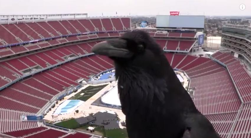Quoth the Levi's Raven: 'He Shoots, He Scores!'