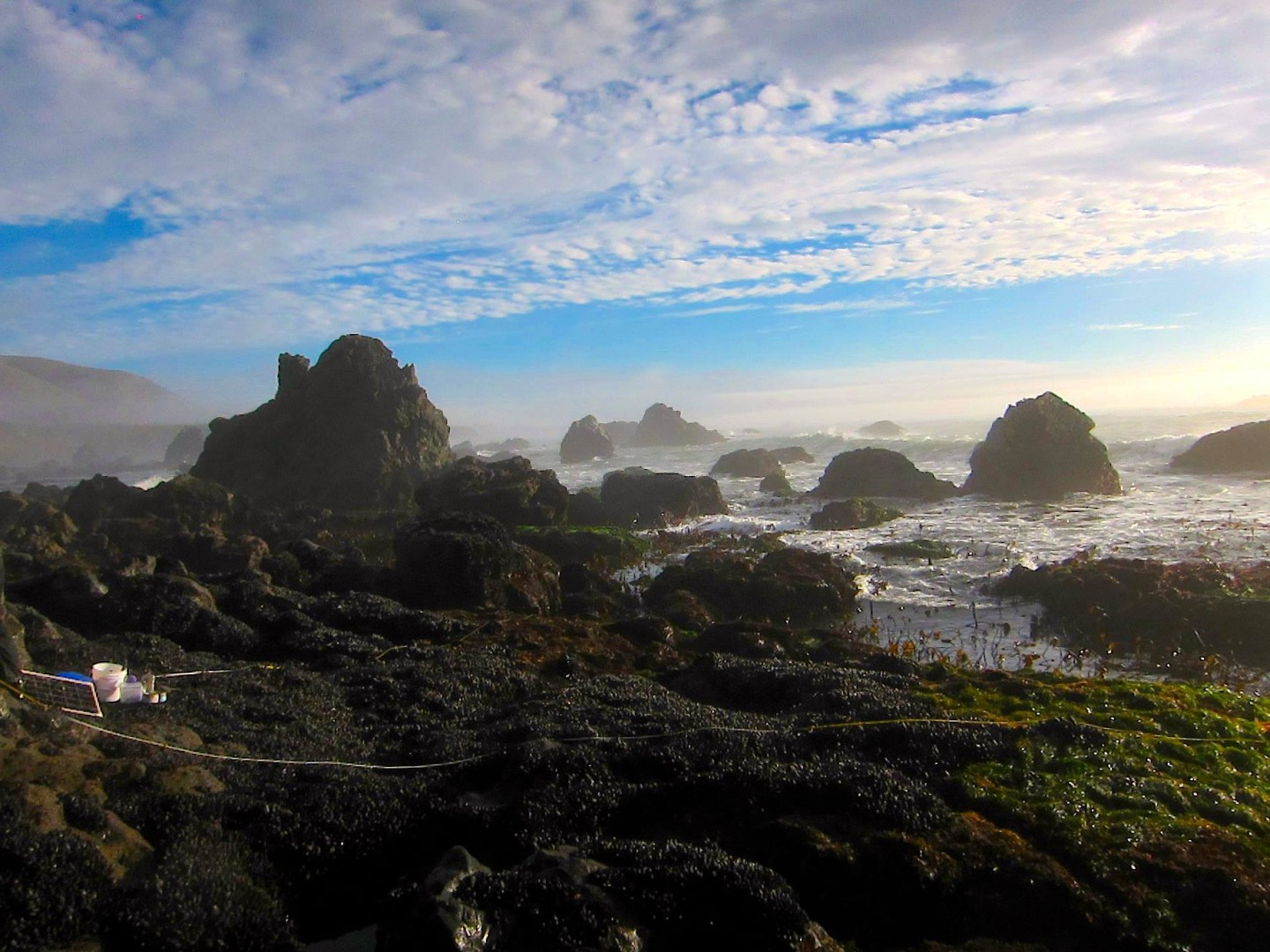 Shell Beach in Sonoma is among the newly protected areas. {Monika Krach/Farallones Marine Sanctuary Association)