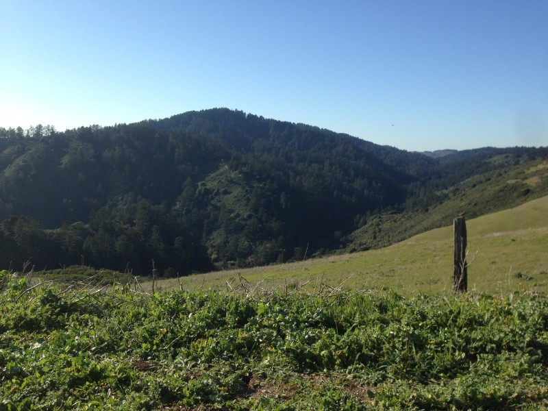 That carpet of lush trees are not native to the watershed! Tim Ramirez of the SF PUC says they were planted about 150 years ago by ranchers, often as wind breaks. What would this place look like without human intervention? Grassland.