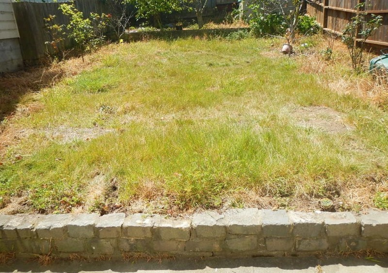 Our yard requires too much water to nurture. As an effort to conserve water, our yard is now yellow and full of overgrown weeds. It has become rats' and cats' battlefield. It's covered with rat holes, cat poop/pee, and sometimes even rat carcasses!