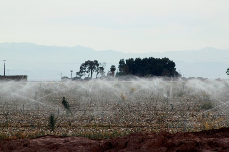 Agricultural sprinklers dousing a field in the Imperial Valley town of El Centro with Colorado River water. Farmers here are under no drought-related restrictions.