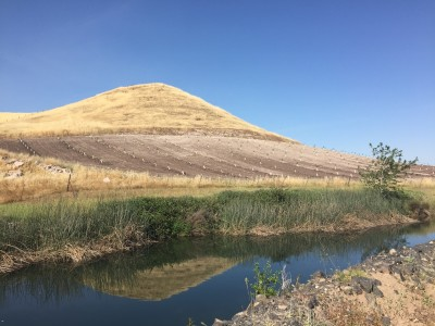 A hillside adjacent to Kathy Smith's ranch, recently planted in almonds.