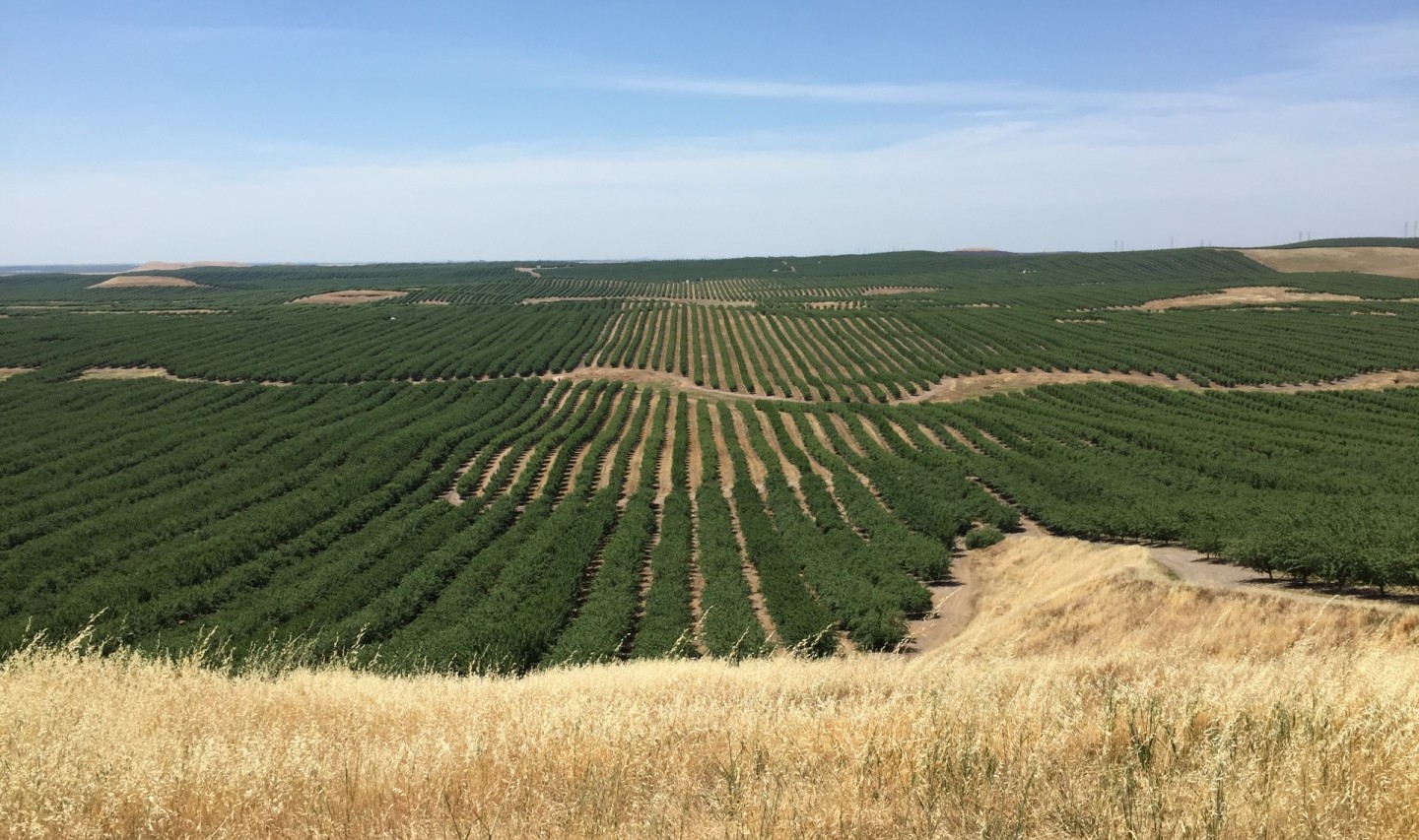 Almond orchards are proliferating in the Stanislaus County foothills, land long used for cattle grazing. Sasha Khokha/KQED
