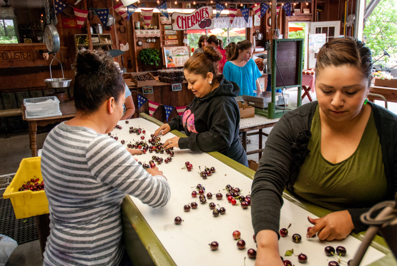 Workers sort cherries at the Rajkovich's farm stand and sorting facility in Hollister, Calif.