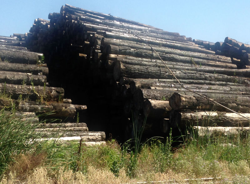 The log deck at Sierra Forest Products is almost full.