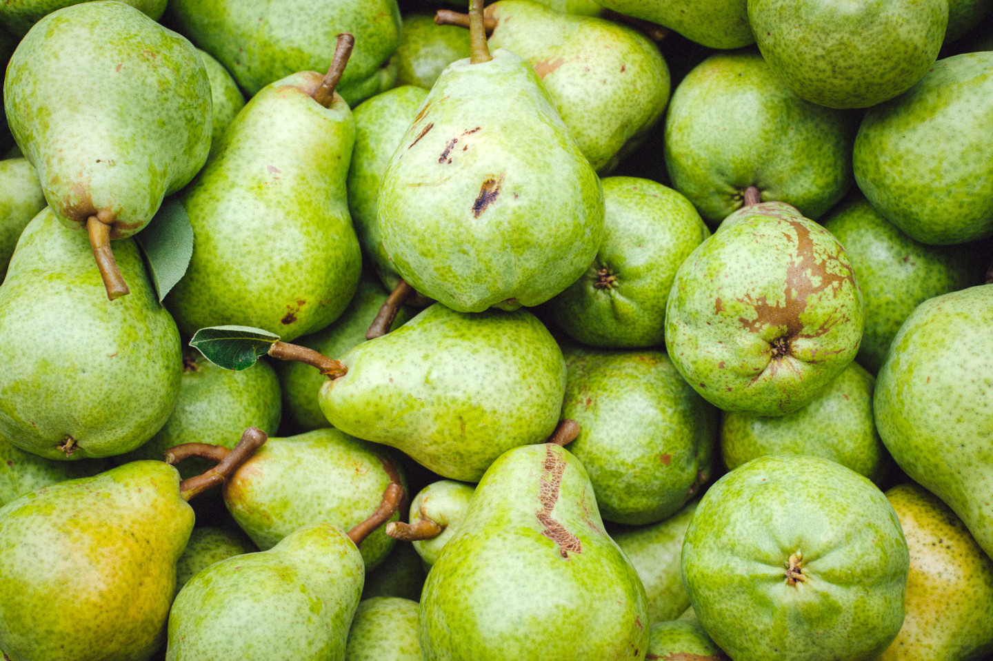 """Pears with cosmetic blemishes such as """"limb rub"""" -- surface imperfections that have nothing to do with quality or taste -- wind up in a different market category. Cynthia E. Wood/KQED"""